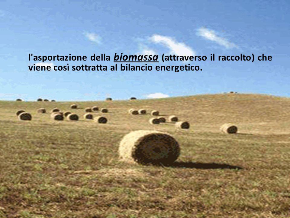 l asportazione della biomassa (attraverso il raccolto) che viene così sottratta al bilancio energetico.