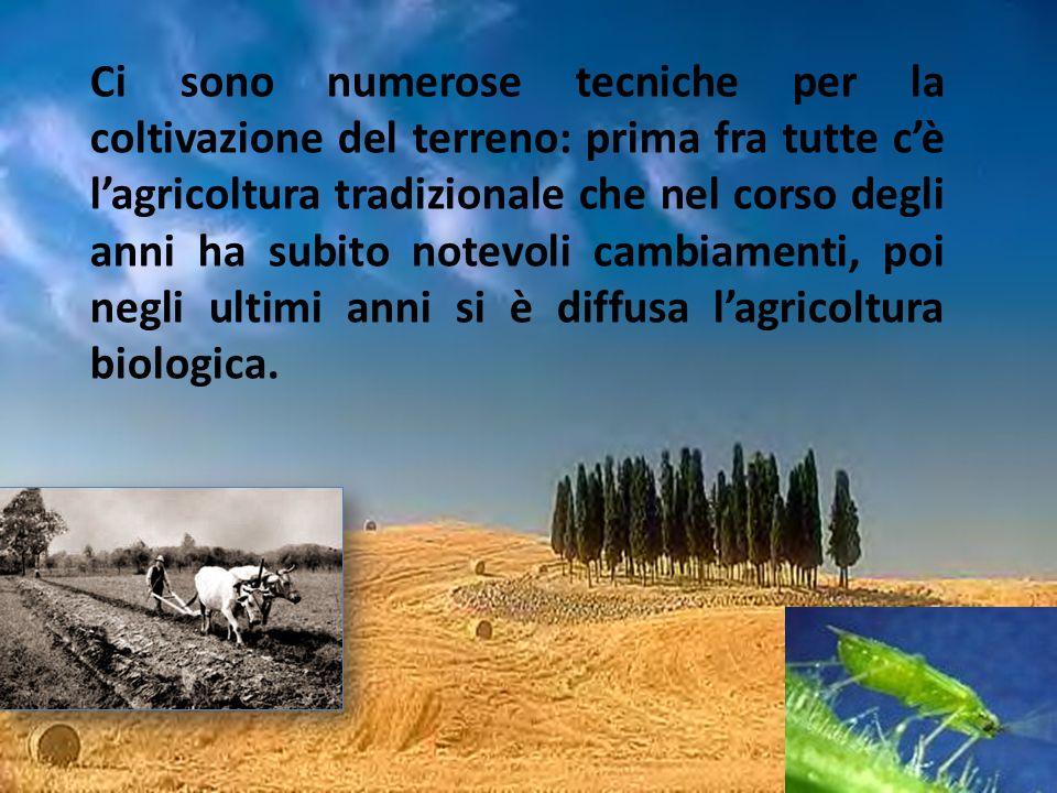 Ci sono numerose tecniche per la coltivazione del terreno: prima fra tutte c'è l'agricoltura tradizionale che nel corso degli anni ha subito notevoli cambiamenti, poi negli ultimi anni si è diffusa l'agricoltura biologica.