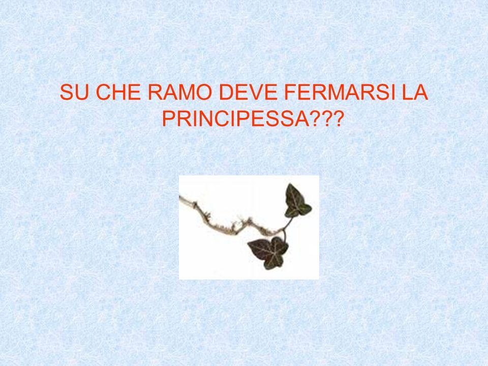 SU CHE RAMO DEVE FERMARSI LA PRINCIPESSA