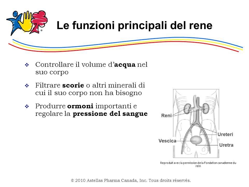 Le funzioni principali del rene