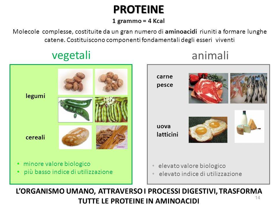 PROTEINE vegetali animali