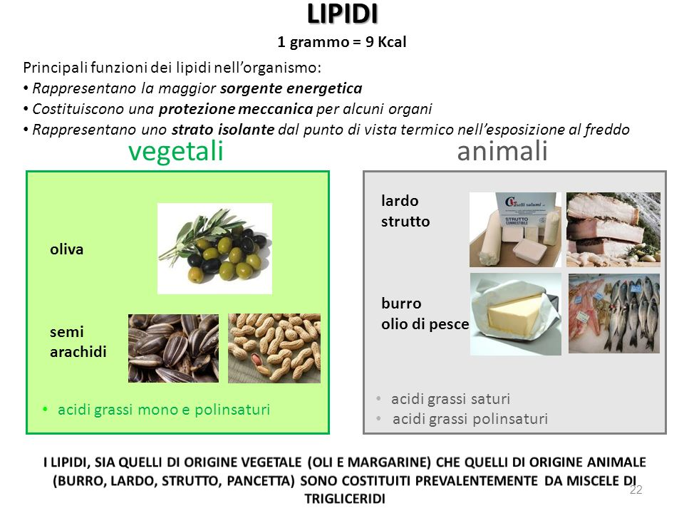LIPIDI vegetali animali 1 grammo = 9 Kcal