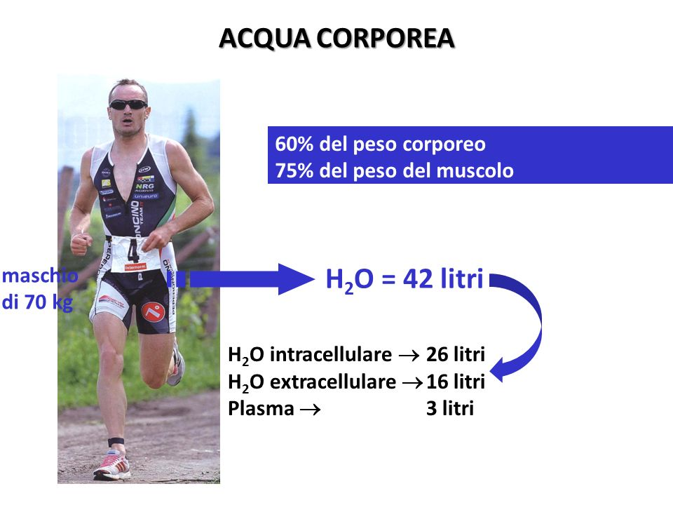 ACQUA CORPOREA H2O = 42 litri 60% del peso corporeo