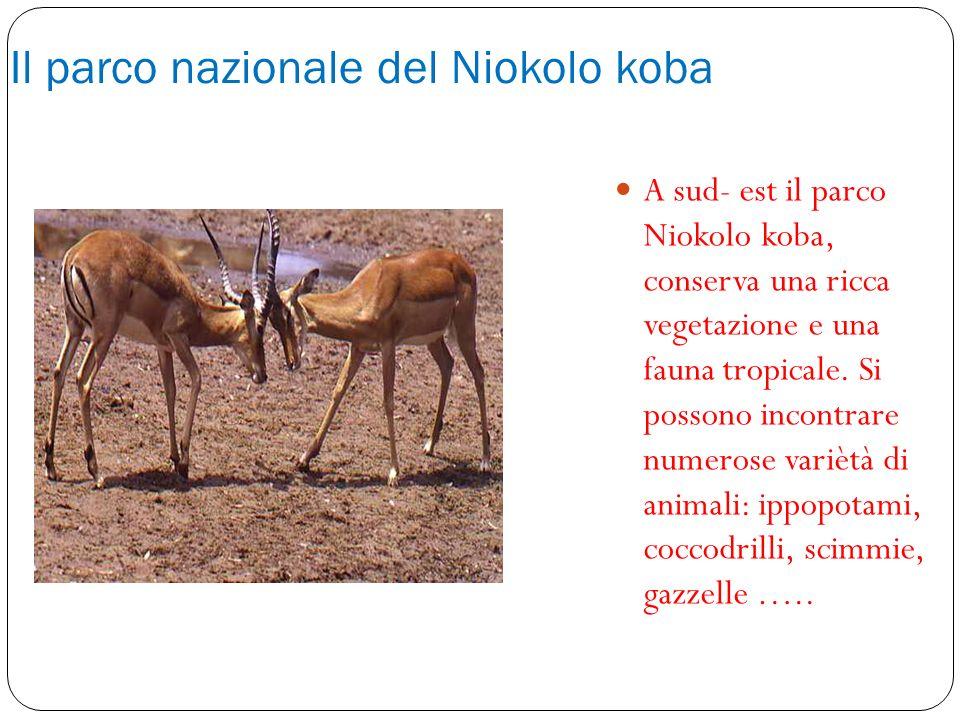 Il parco nazionale del Niokolo koba