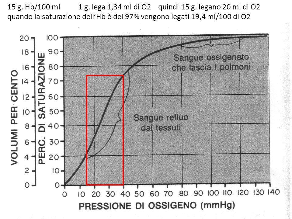 15 g. Hb/100 ml 1 g. lega 1,34 ml di O2 quindi 15 g. legano 20 ml di O2