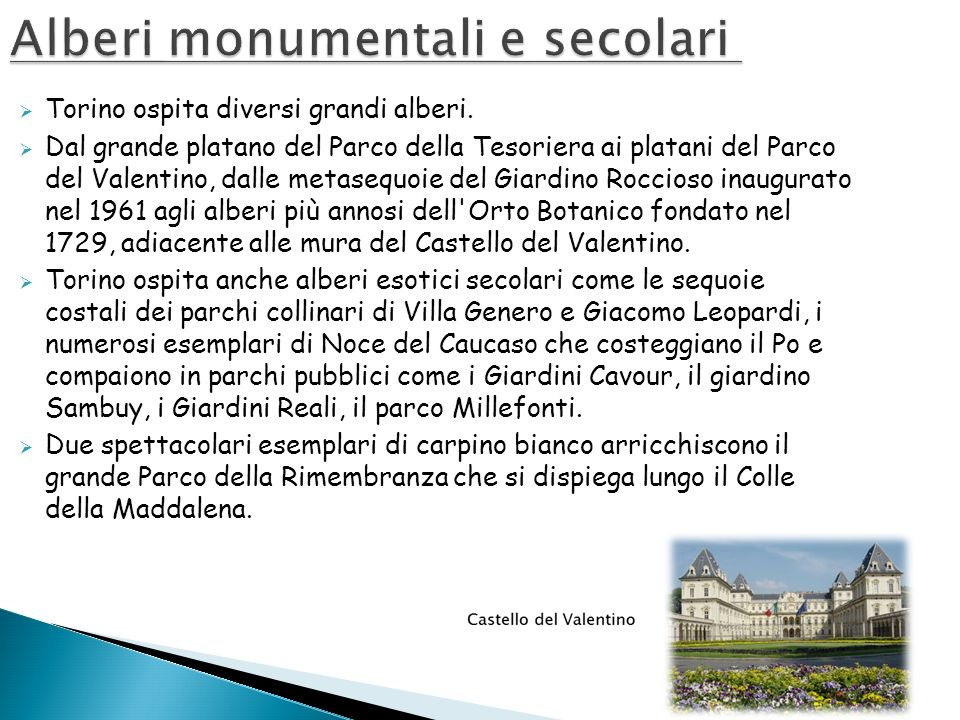 Alberi monumentali e secolari