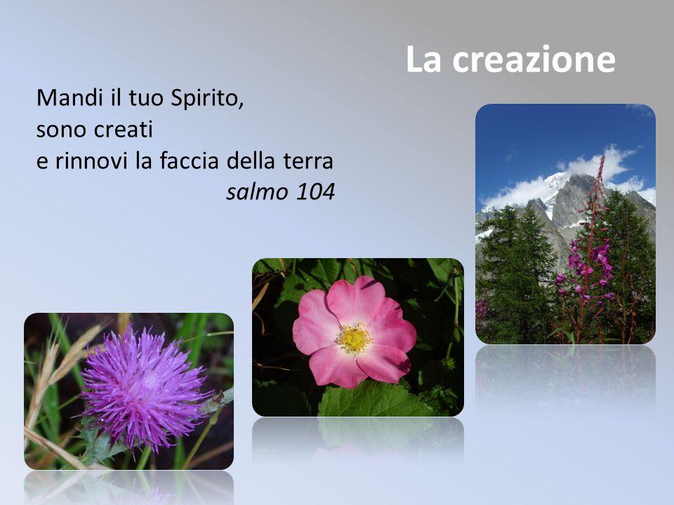 La creazione Mandi il tuo Spirito, sono creati