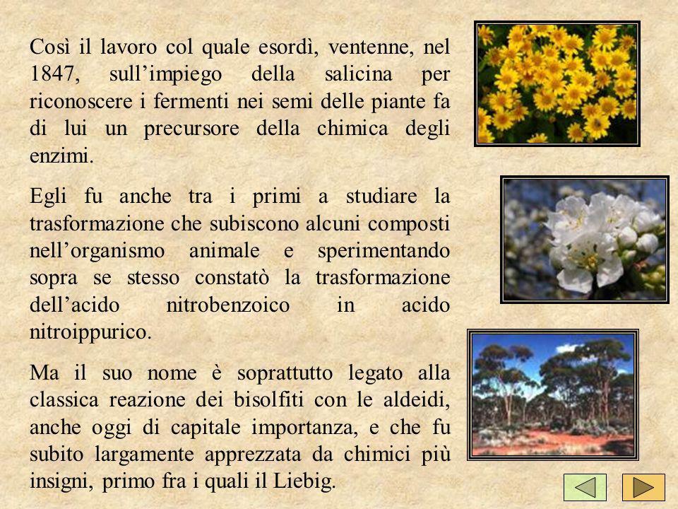 Così il lavoro col quale esordì, ventenne, nel 1847, sull'impiego della salicina per riconoscere i fermenti nei semi delle piante fa di lui un precursore della chimica degli enzimi.