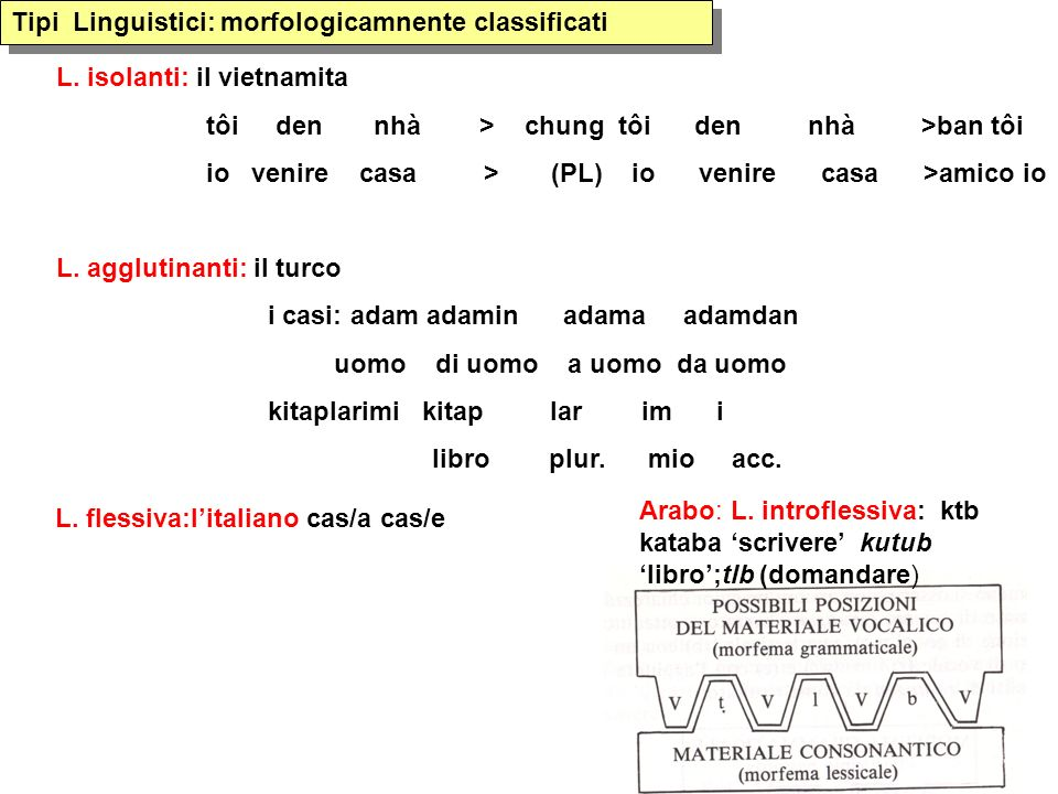 Tipi Linguistici: morfologicamnente classificati
