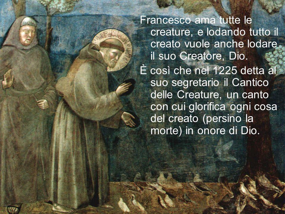 Francesco ama tutte le creature, e lodando tutto il creato vuole anche lodare il suo Creatore, Dio.