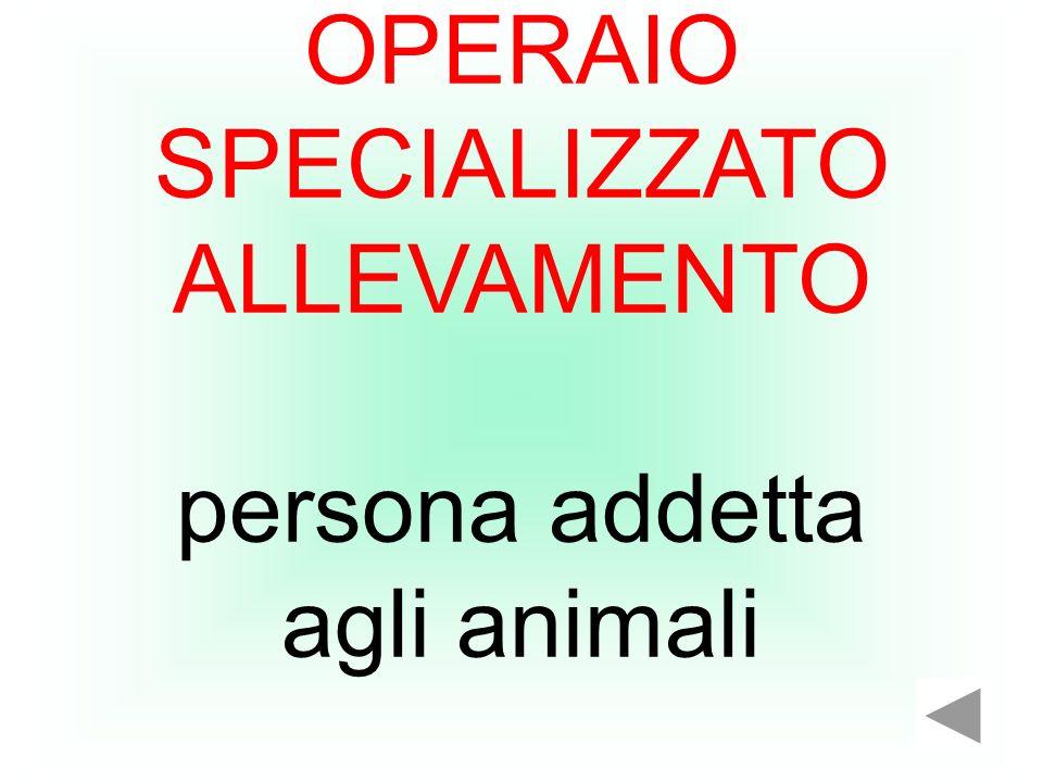 OPERAIO SPECIALIZZATO ALLEVAMENTO persona addetta agli animali