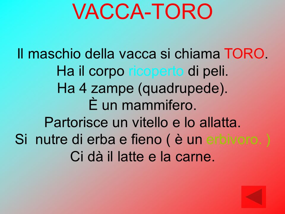 VACCA-TORO Il maschio della vacca si chiama TORO.