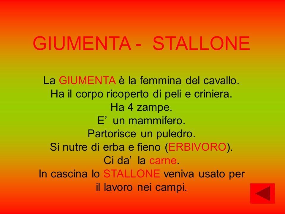 GIUMENTA - STALLONE La GIUMENTA è la femmina del cavallo.