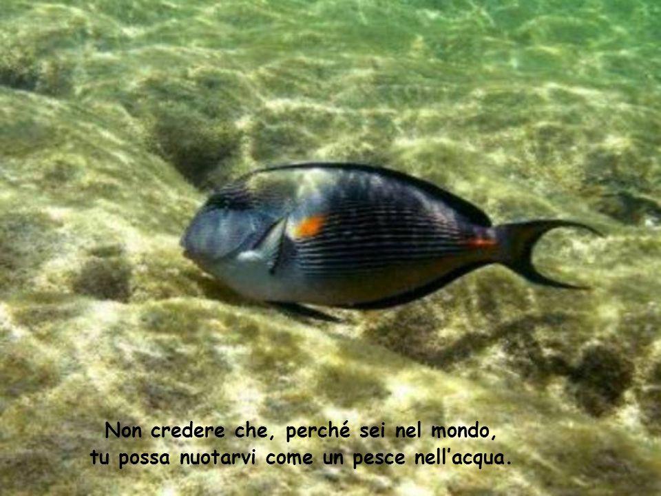 Non credere che, perché sei nel mondo, tu possa nuotarvi come un pesce nell'acqua.