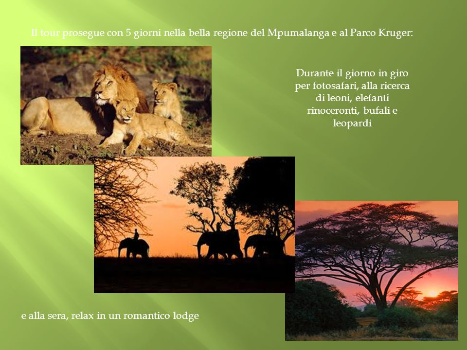 rinoceronti, bufali e leopardi