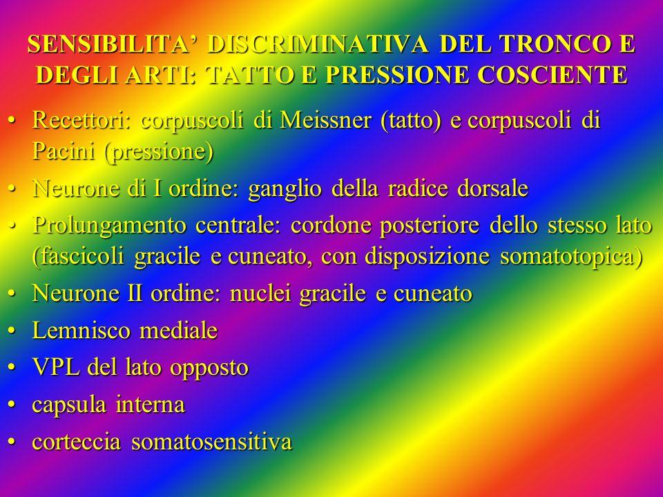 SENSIBILITA' DISCRIMINATIVA DEL TRONCO E DEGLI ARTI: TATTO E PRESSIONE COSCIENTE