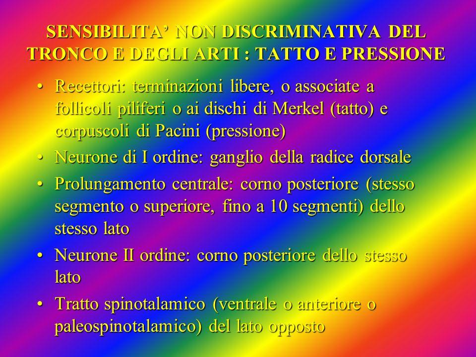 SENSIBILITA' NON DISCRIMINATIVA DEL TRONCO E DEGLI ARTI : TATTO E PRESSIONE