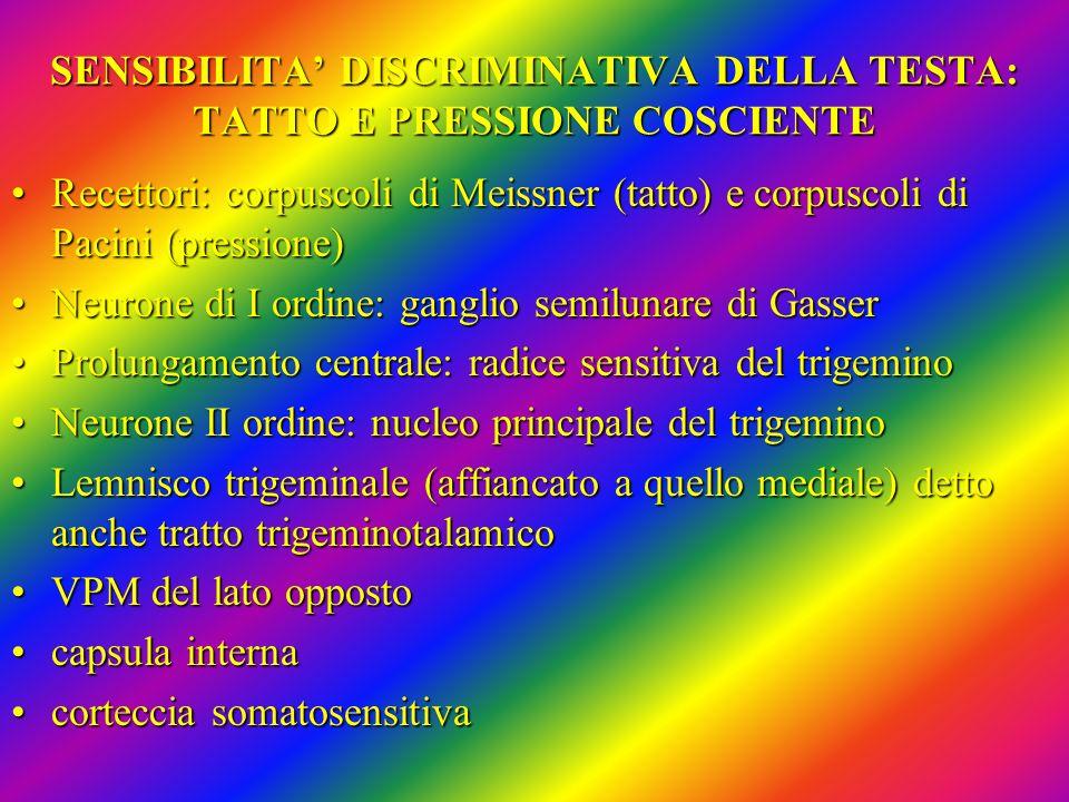 SENSIBILITA' DISCRIMINATIVA DELLA TESTA: TATTO E PRESSIONE COSCIENTE