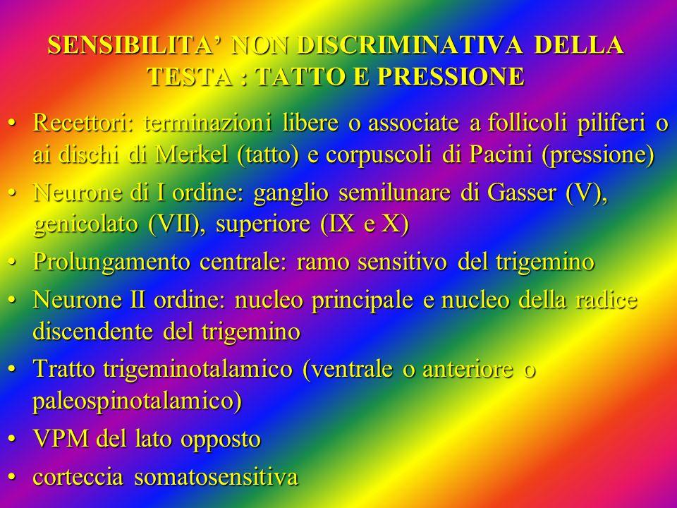 SENSIBILITA' NON DISCRIMINATIVA DELLA TESTA : TATTO E PRESSIONE