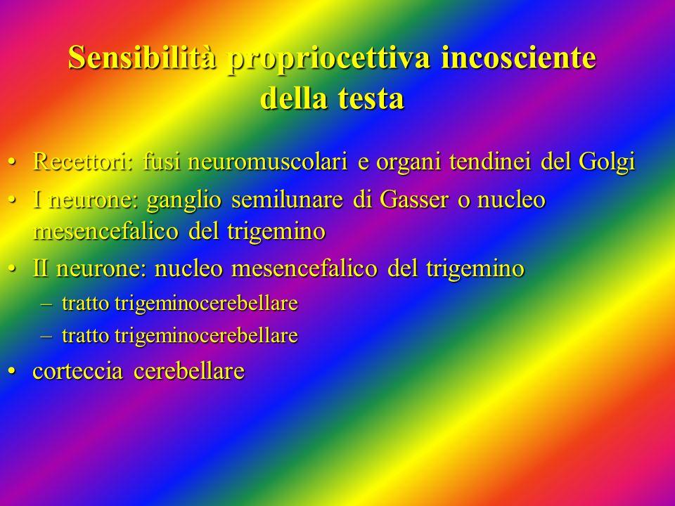 Sensibilità propriocettiva incosciente della testa