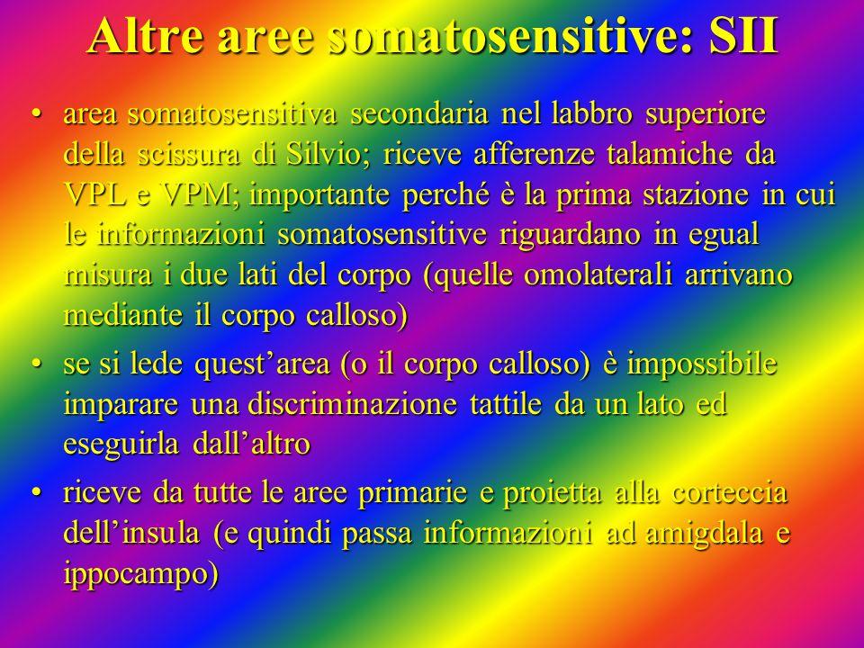Altre aree somatosensitive: SII