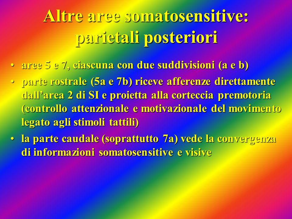 Altre aree somatosensitive: parietali posteriori