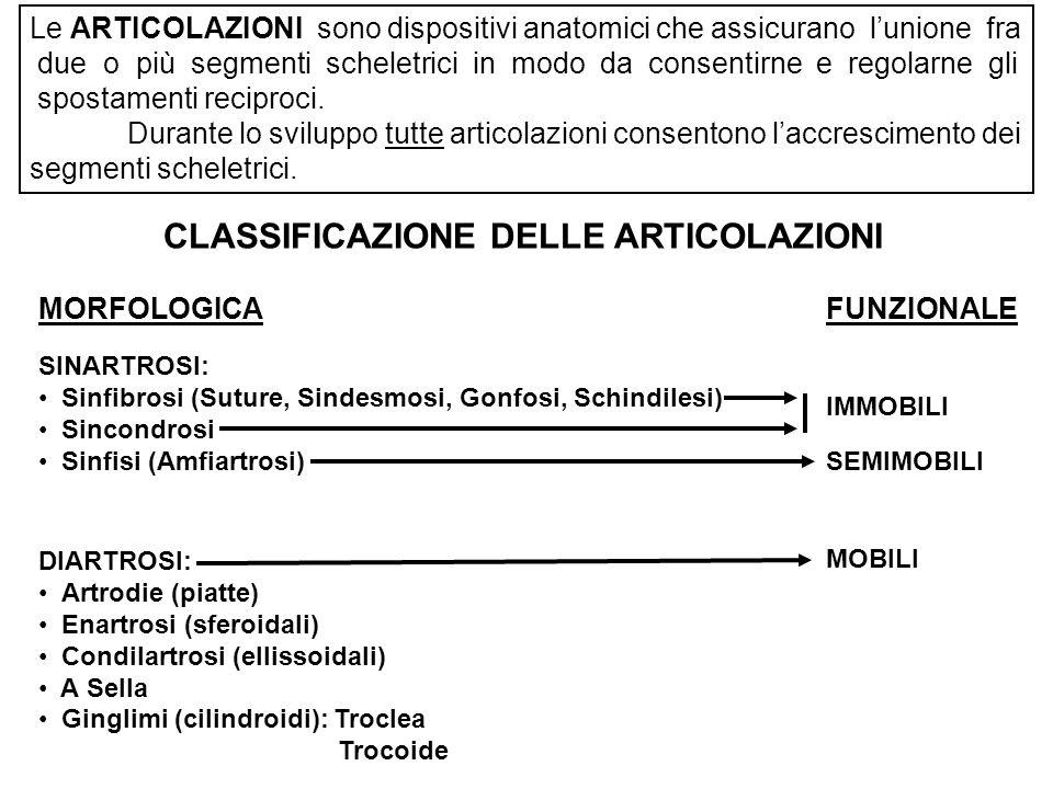CLASSIFICAZIONE DELLE ARTICOLAZIONI
