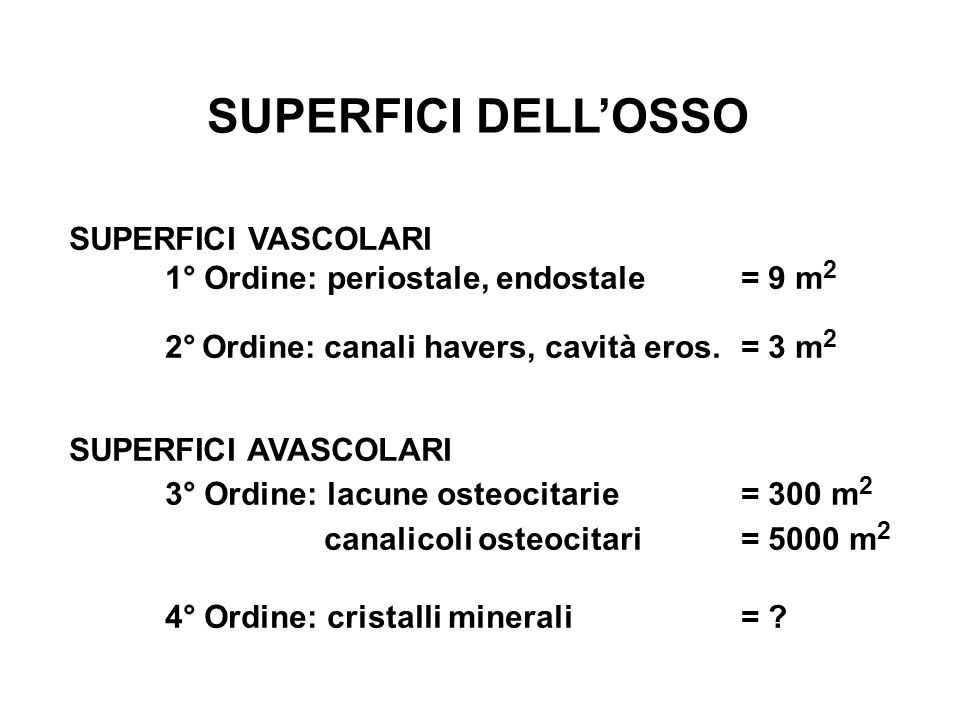 SUPERFICI DELL'OSSO SUPERFICI VASCOLARI