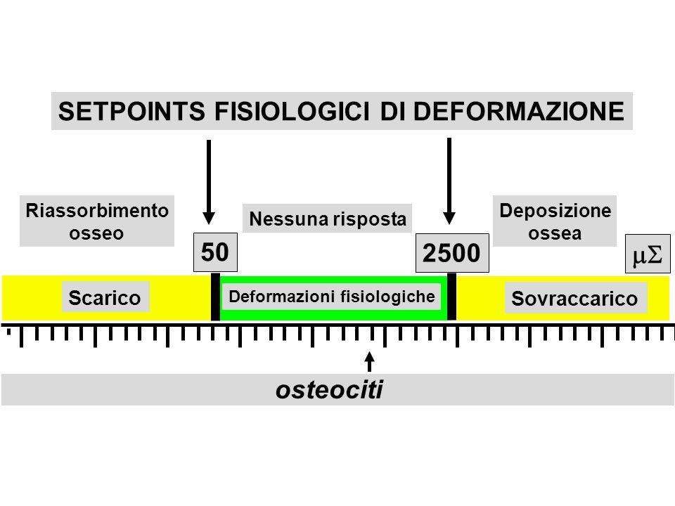 SETPOINTS FISIOLOGICI DI DEFORMAZIONE