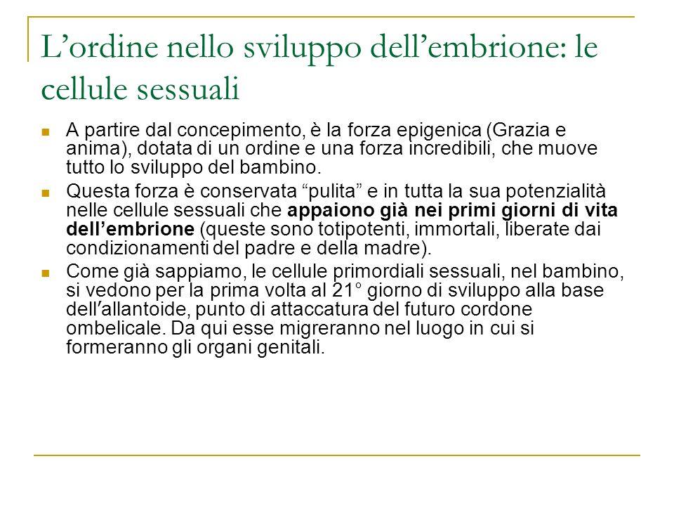L'ordine nello sviluppo dell'embrione: le cellule sessuali
