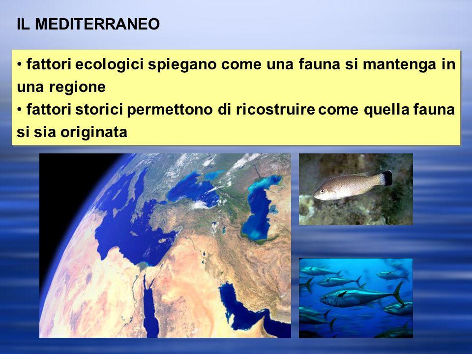 IL MEDITERRANEO fattori ecologici spiegano come una fauna si mantenga in una regione.