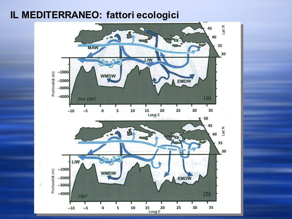 IL MEDITERRANEO: fattori ecologici