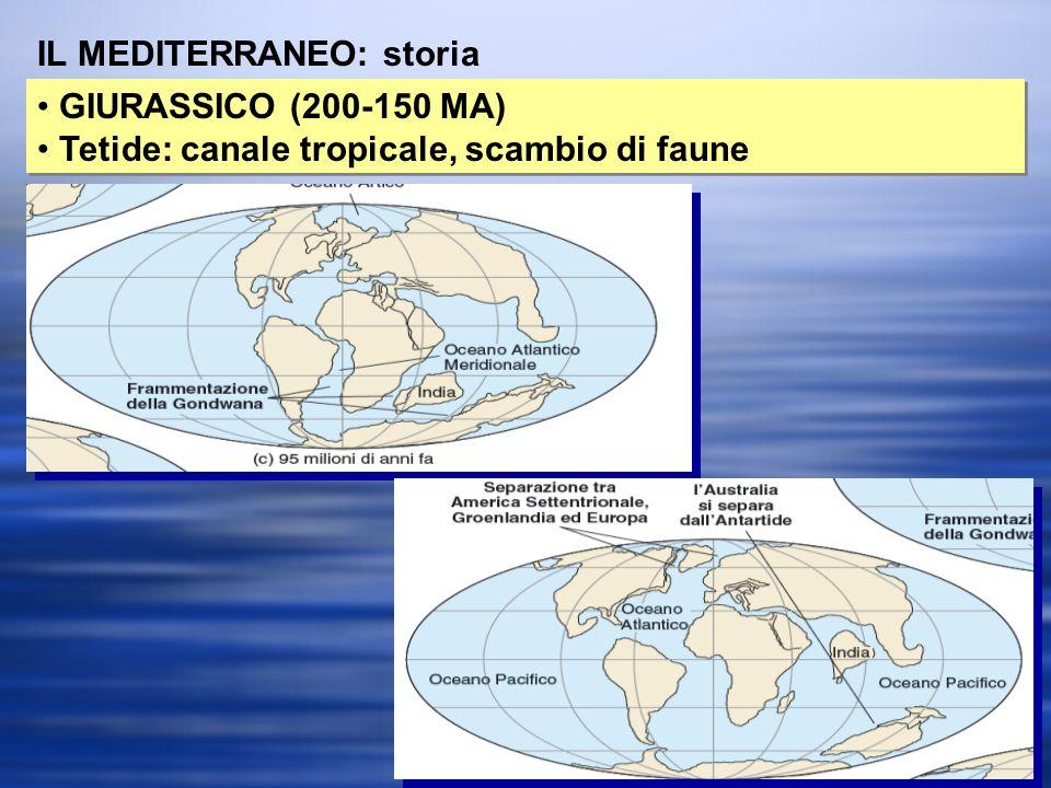 IL MEDITERRANEO: storia
