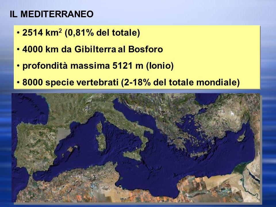 IL MEDITERRANEO 2514 km2 (0,81% del totale) 4000 km da Gibilterra al Bosforo. profondità massima 5121 m (Ionio)