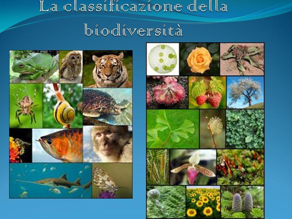 La classificazione della biodiversità