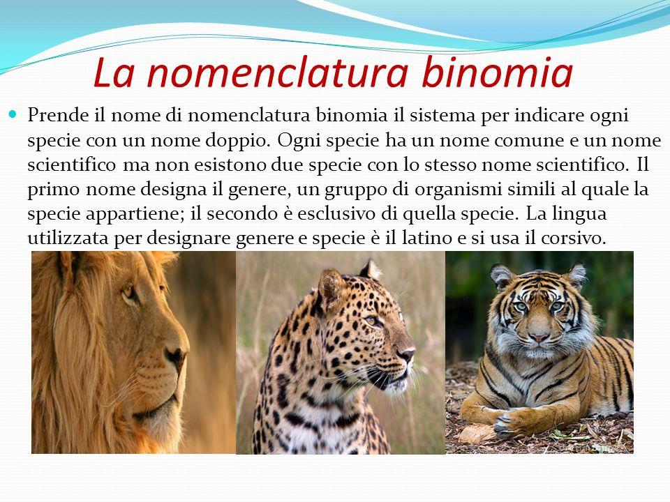 La nomenclatura binomia