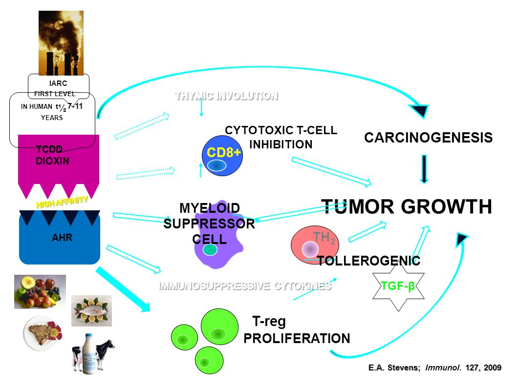 CYTOTOXIC T-CELL INHIBITION