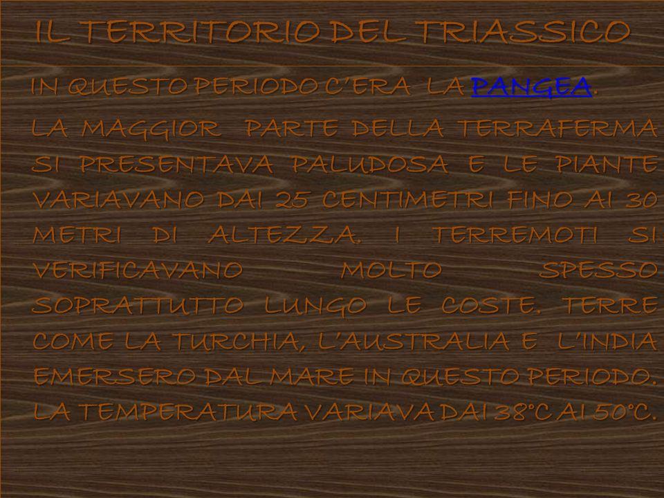 IL TERRITORIO DEL TRIASSICO
