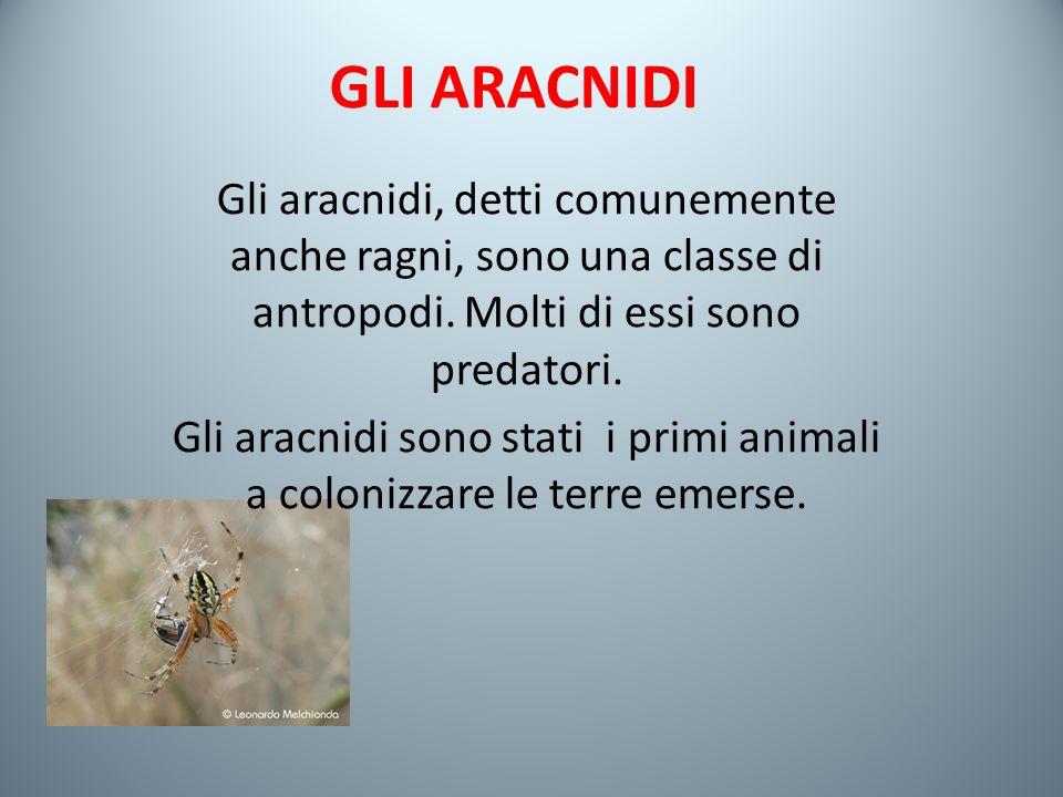 Gli aracnidi sono stati i primi animali a colonizzare le terre emerse.