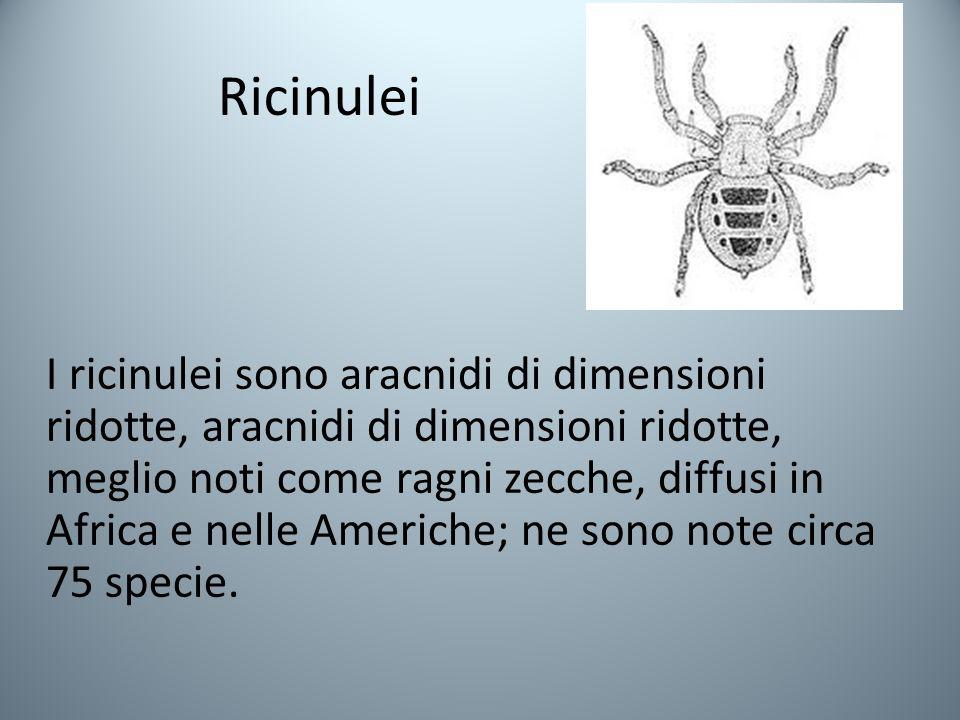 Ricinulei