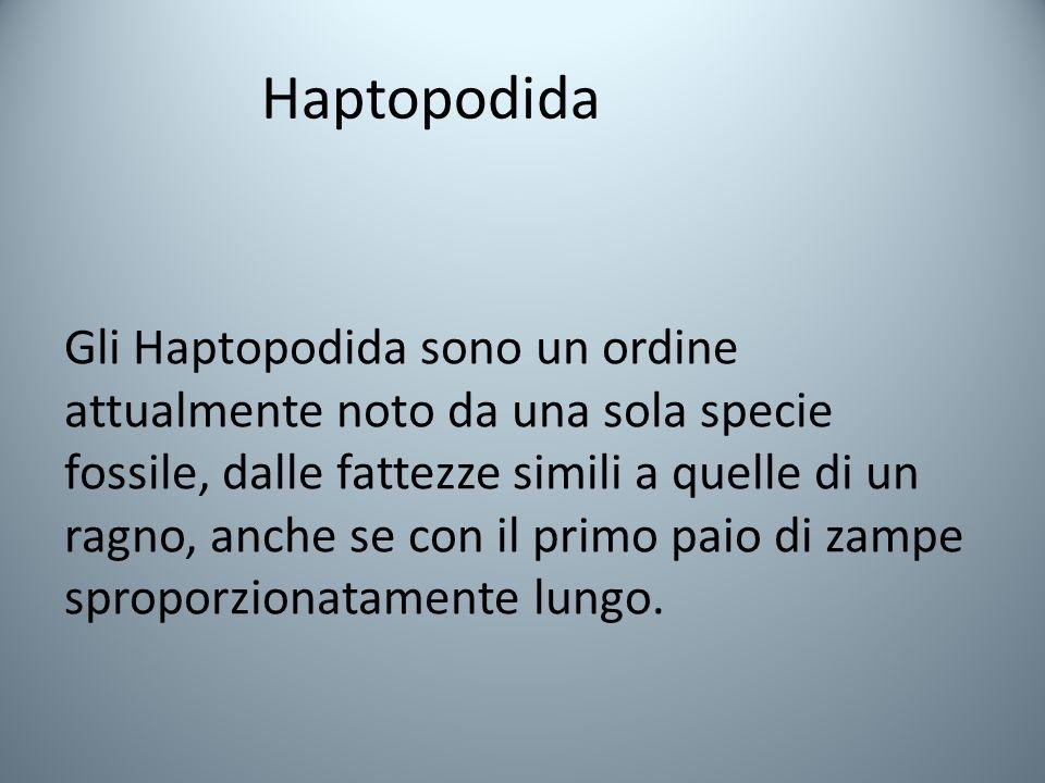 Haptopodida