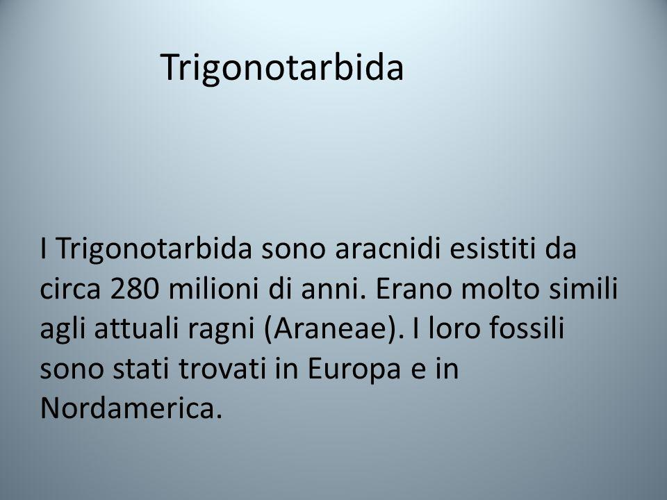 Trigonotarbida