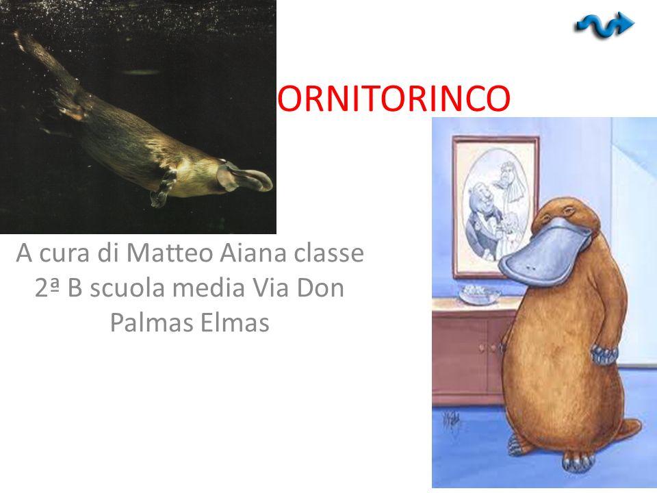 A cura di Matteo Aiana classe 2ª B scuola media Via Don Palmas Elmas