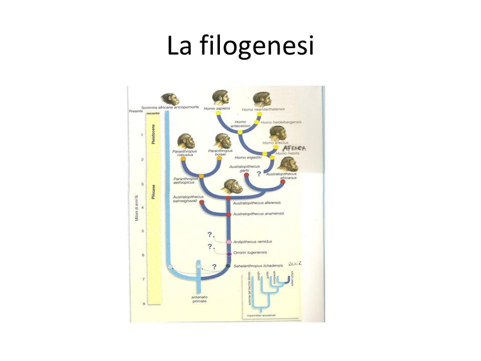 La filogenesi