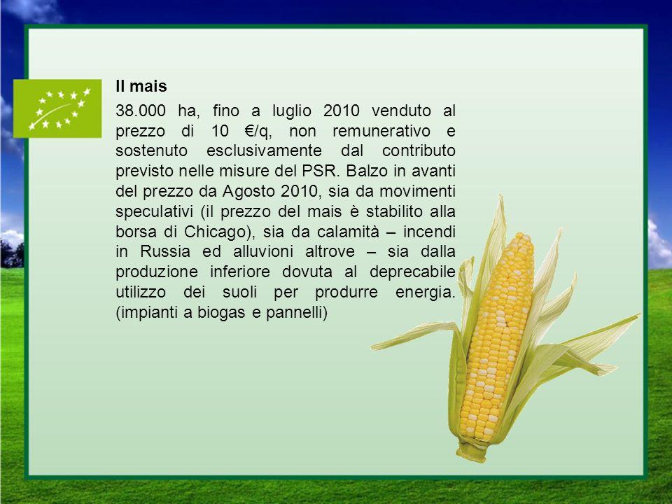 Il mais 38.000 ha, fino a luglio 2010 venduto al prezzo di 10 €/q, non remunerativo e sostenuto esclusivamente dal contributo previsto nelle misure del PSR.
