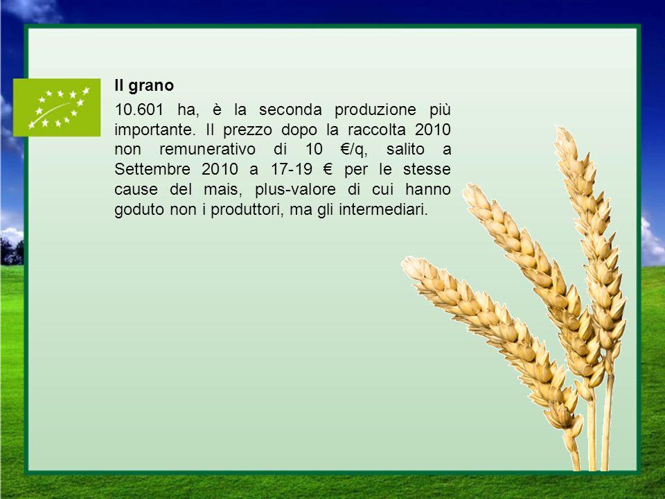 Il grano 10. 601 ha, è la seconda produzione più importante