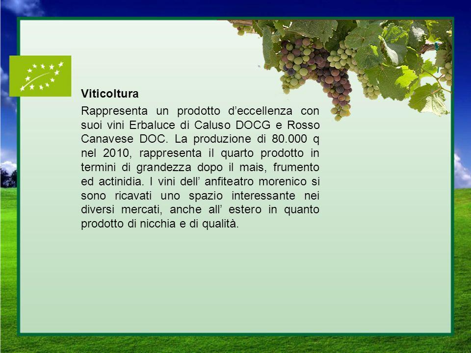 Viticoltura Rappresenta un prodotto d'eccellenza con suoi vini Erbaluce di Caluso DOCG e Rosso Canavese DOC.