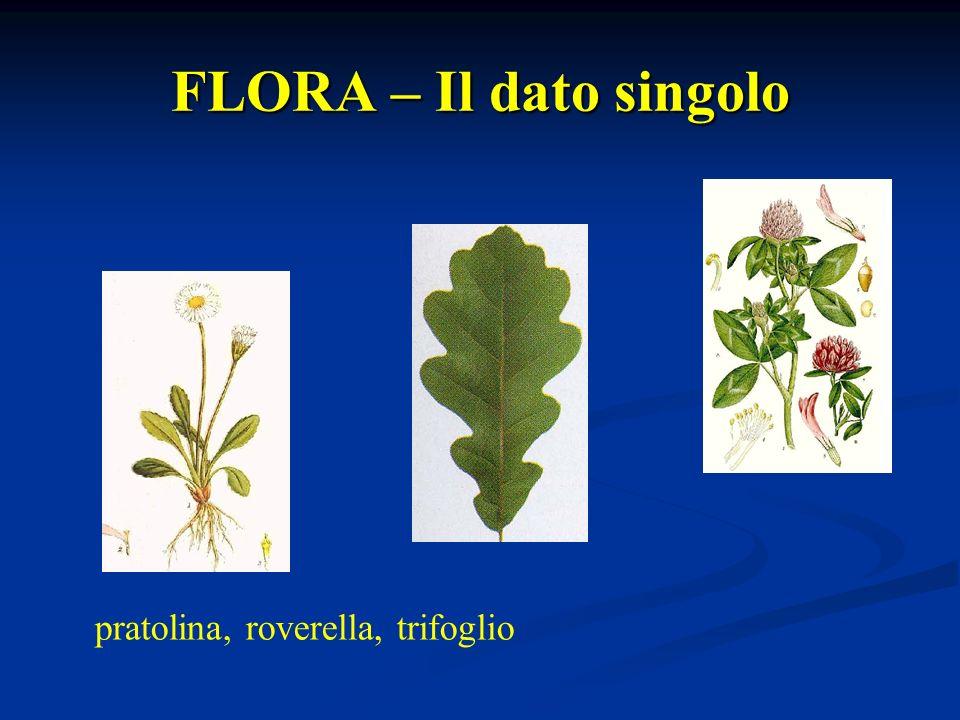 FLORA – Il dato singolo pratolina, roverella, trifoglio