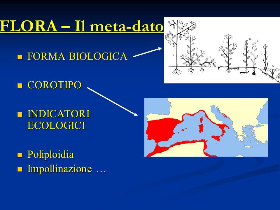 FLORA – Il meta-dato FORMA BIOLOGICA COROTIPO INDICATORI ECOLOGICI
