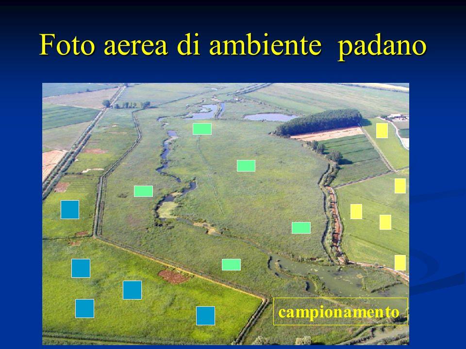 Foto aerea di ambiente padano